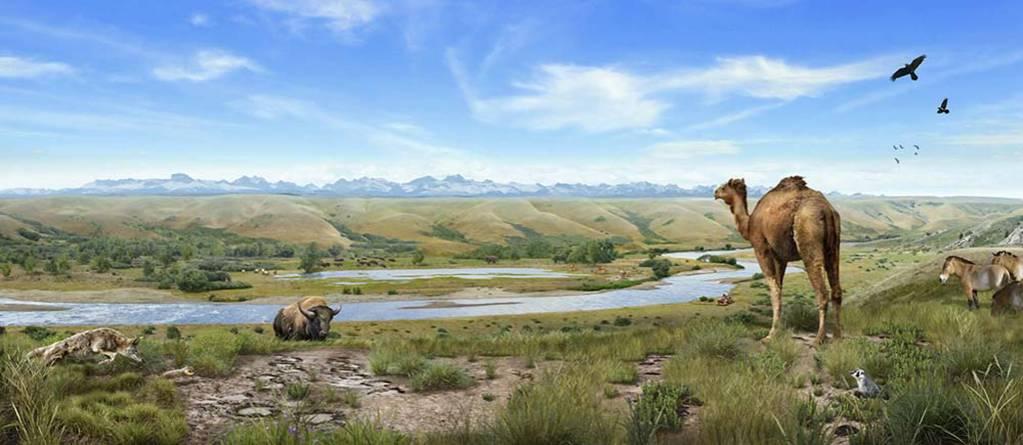 murale-paleontologie-histoire-animaux-illustration