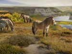 murale-lanscape-chevaux-horses-animaux-illustration
